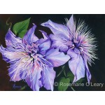 Purple Clematis Signed Prints