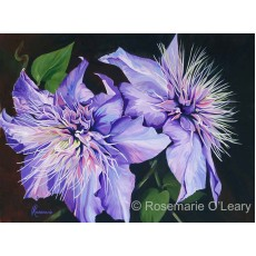 Purple Clematis - Signed Prints