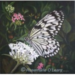 Tree nymph, rice paper butterfly on a white agapanthus flower-painting